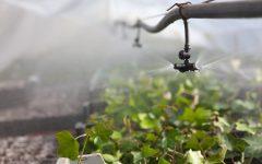 Sprinkler/Micro Spray Systems