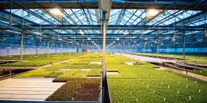 https://www.berger.ca/es/wp-content/uploads/sites/3/2016/04/bkg_greenhouse-300x150